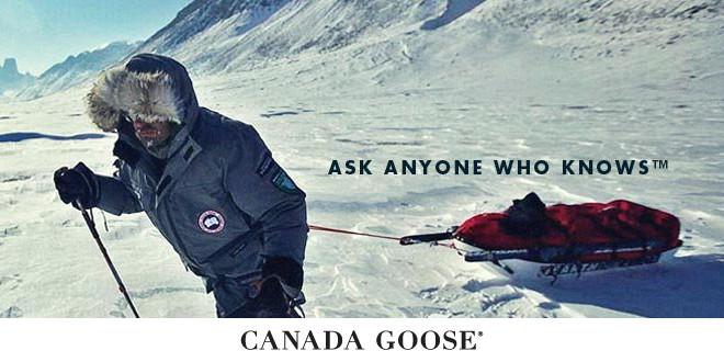 канадский гусь онлайн